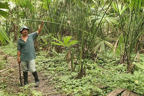 3d54f7ea1d5f8 Tejido tradicional del sombrero ecuatoriano de paja toquilla ...